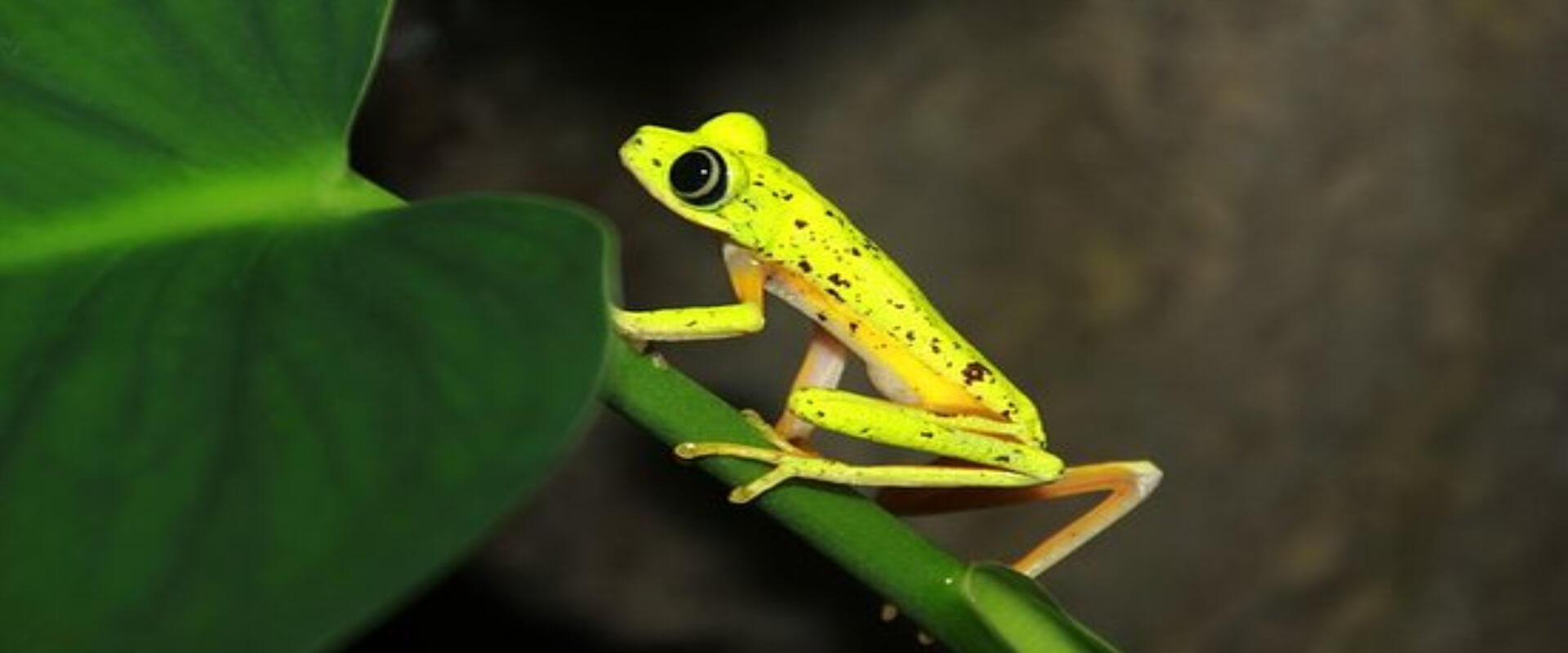 Arenal Natura Guided Night Walk | Costa Rica Jade Tours