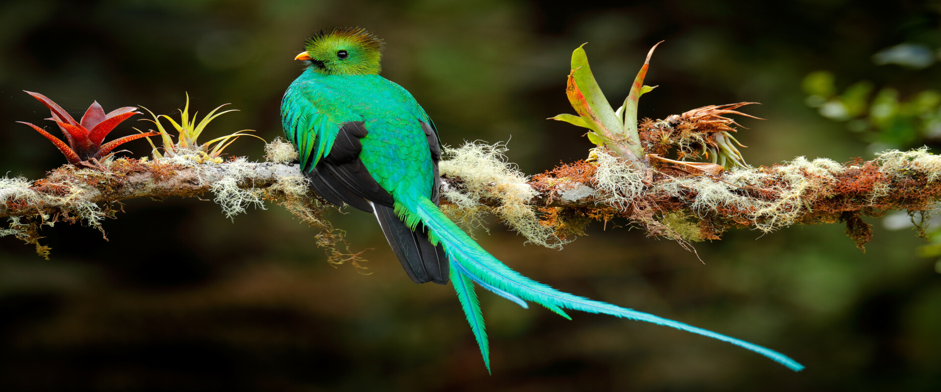 Curicancha Birdwatching Private Tour | Costa Rica Jade Tours
