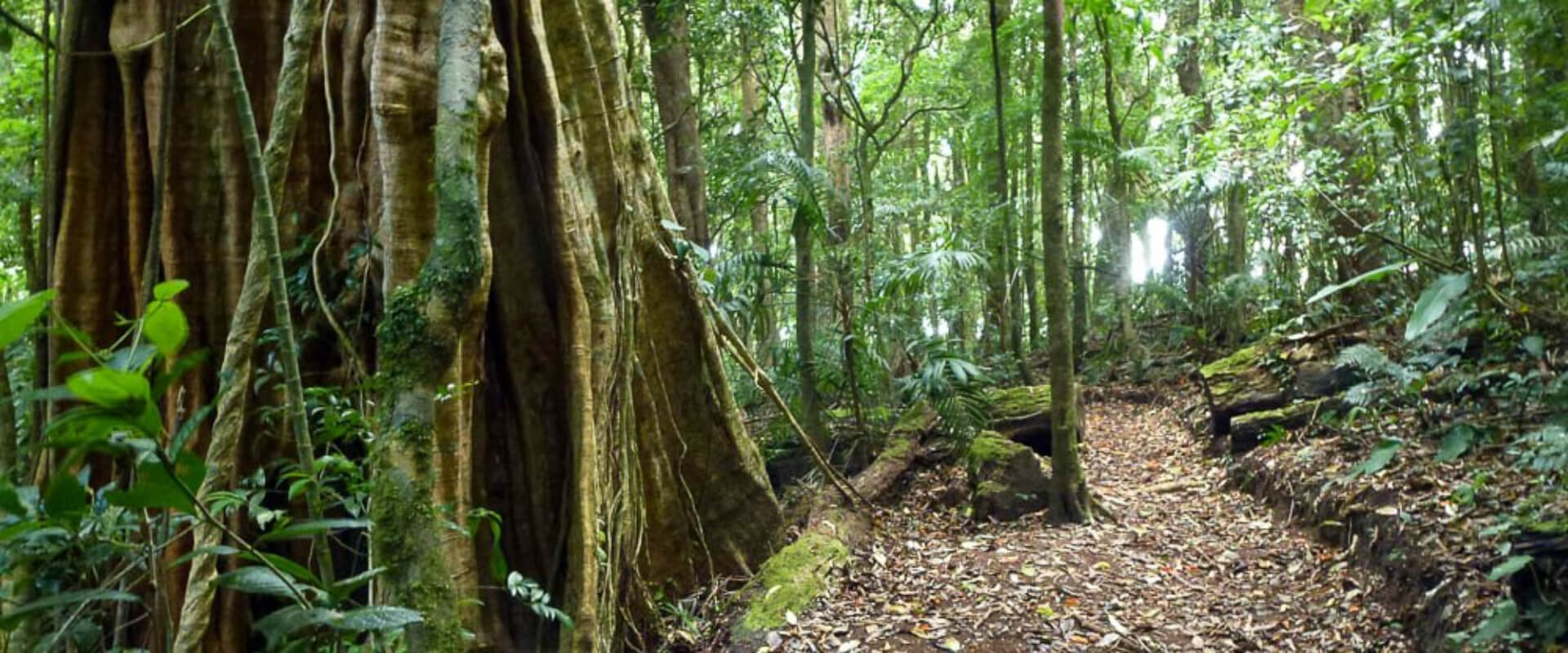 Curicancha Natural History Tour | Costa Rica Jade Tours