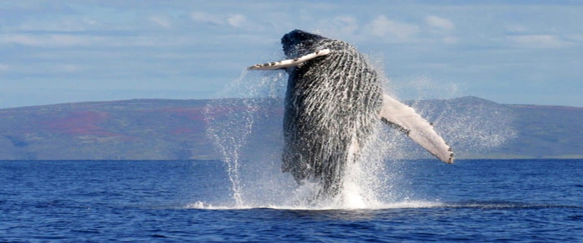 Dolphin and Whale Watching Tour | Costa Rica Jade Tours