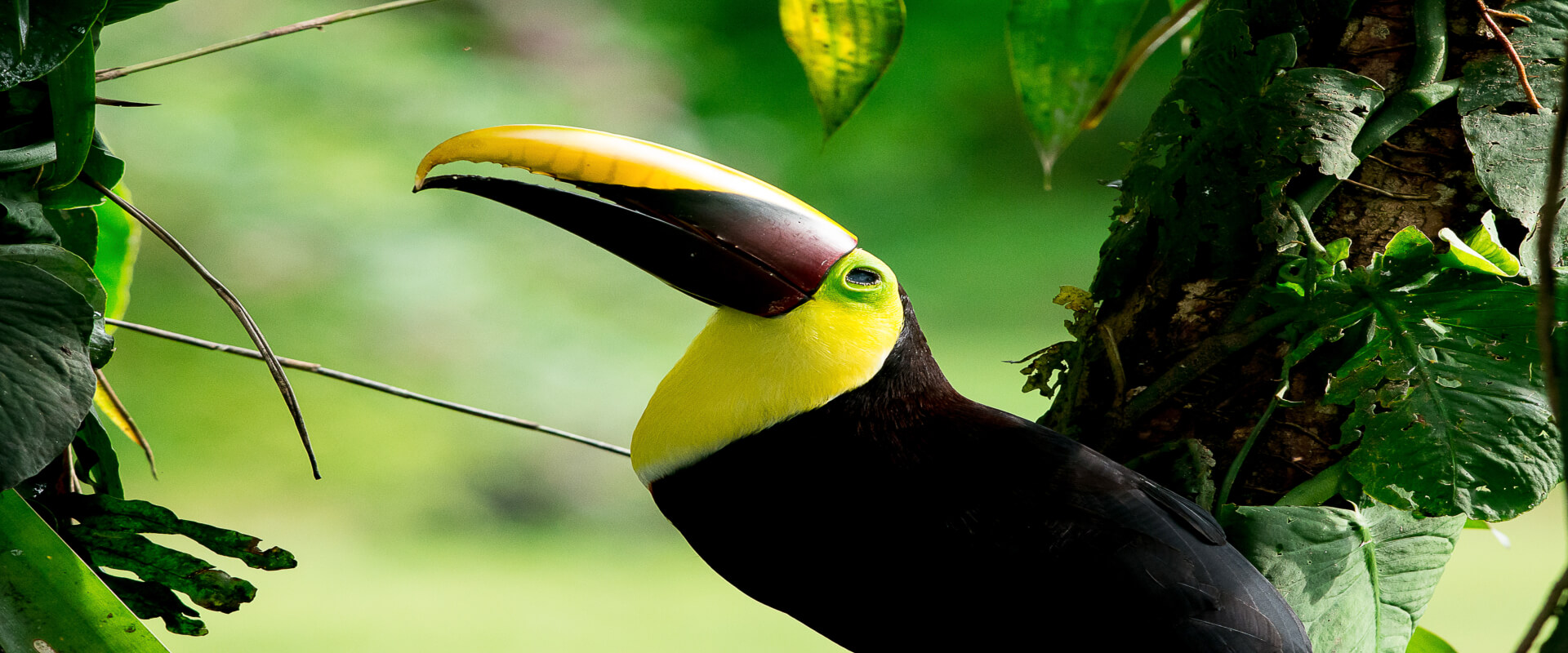 Drake Bay Bird Watching Tour | Costa Rica Jade Tours