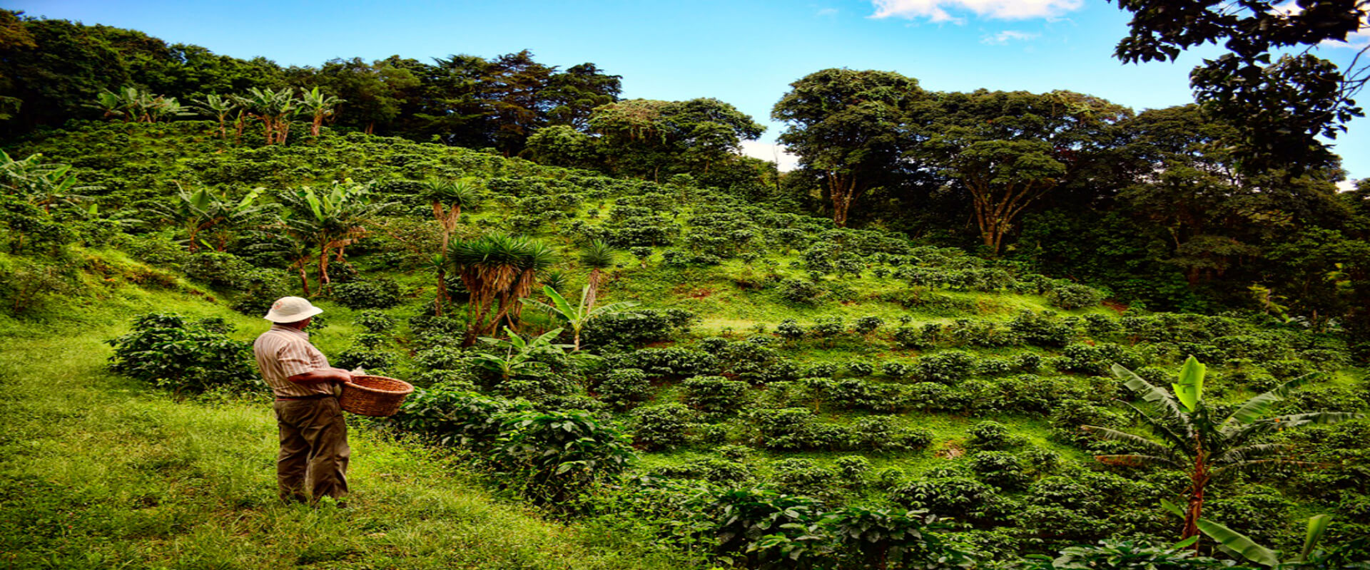Monteverde Coffee Tour | Costa Rica Jade Tours