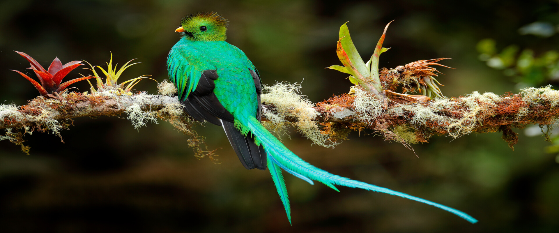 Monteverde Cloud Forest Biological Reserve Nature Tour | Costa Rica Jade Tours
