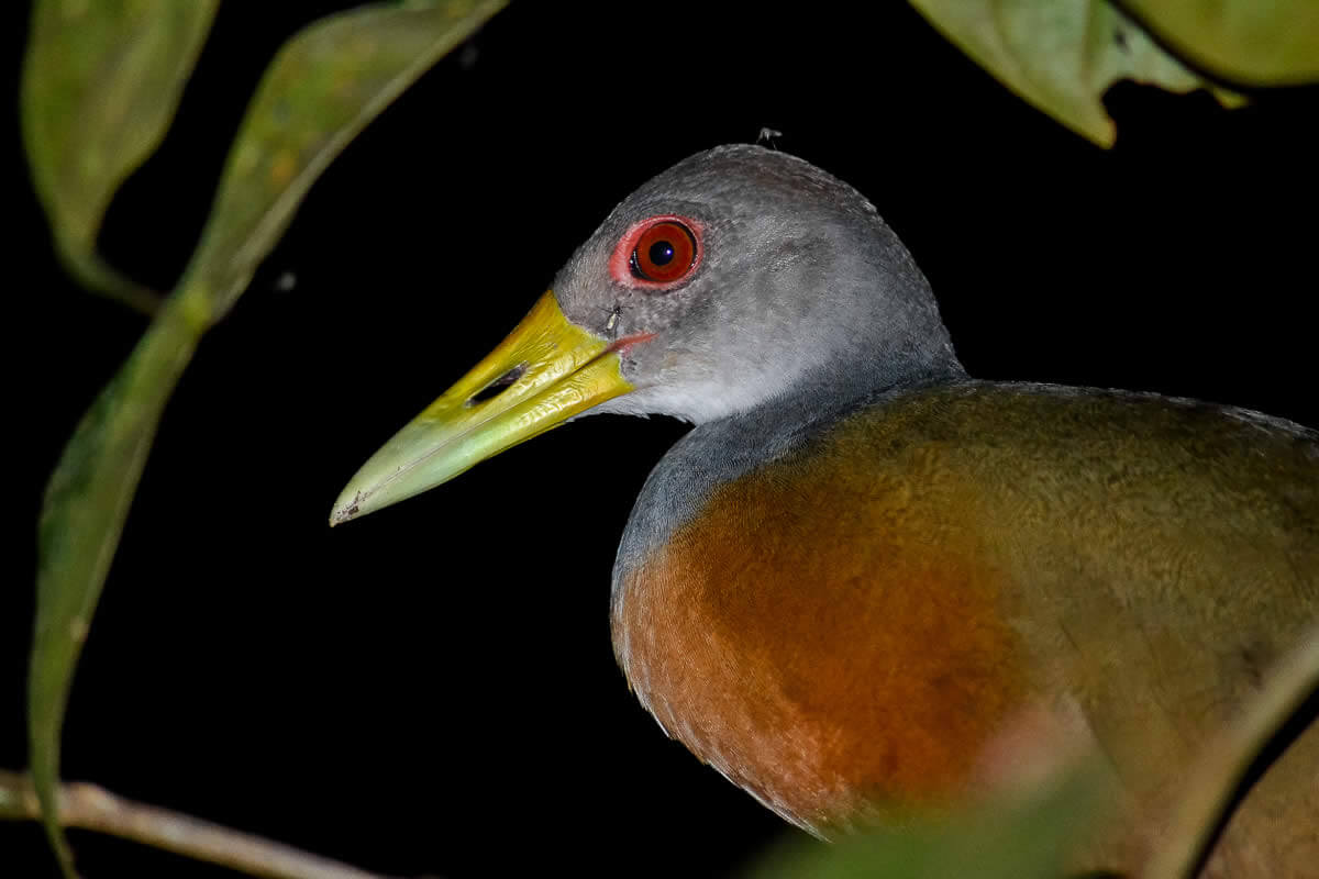 Night Mangrove Boat Tour Gallery