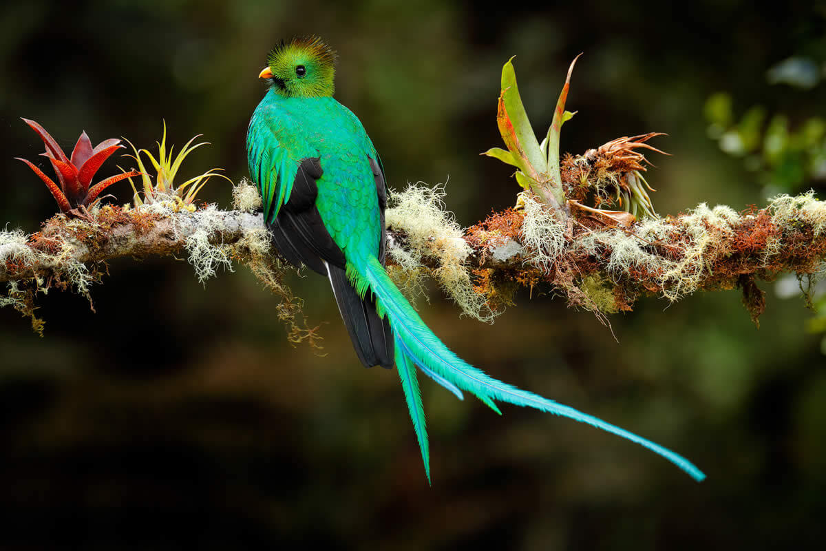 Quetzal and Highland Expedition Bird Watching Tour Gallery