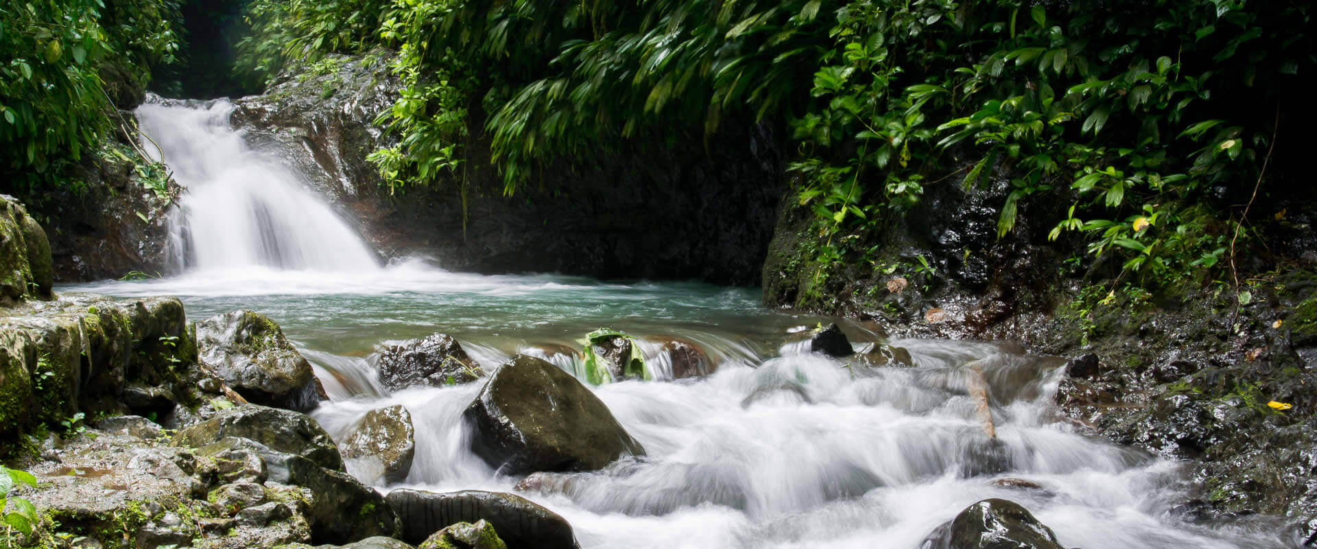 Rainmaker Park Tour | Costa Rica Jade Tours