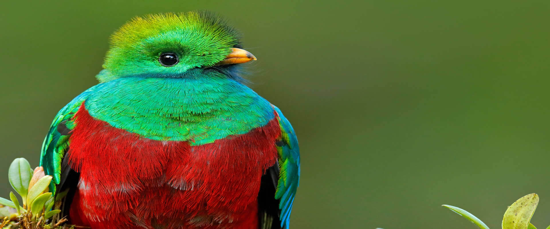 Quetzal and Highland Expedition Bird Watching Tour