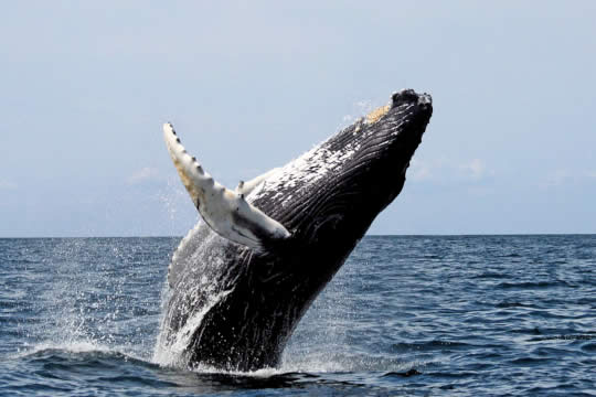 Dolphin and Whale Watching Tour